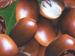 Shea Nuts is an industry in Ghana.